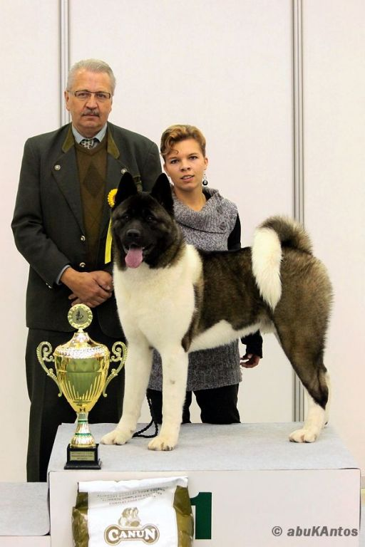 Junior BIS - International Dog Show (autor foto: Jakub Antoš)